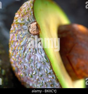 Avocado - Stockfoto