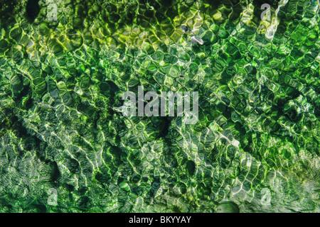 heiße Quellen Strom mit lebendigen Smaragd und grüne Algen und Wellen - Stockfoto