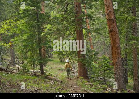 Wanderer auf Arizona National Scenic Trail inmitten von gemischten Nadelwald auf Mormone Berg, [Coconino National - Stockfoto