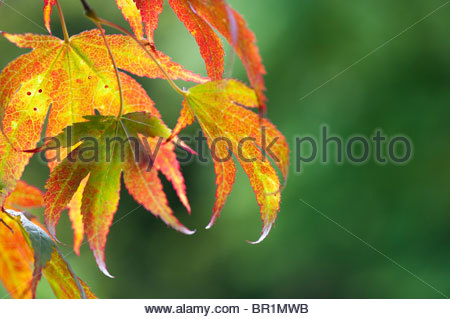 laubb ume im herbst bunte w lder felbrigg norfolk stockfoto bild 167181733 alamy. Black Bedroom Furniture Sets. Home Design Ideas