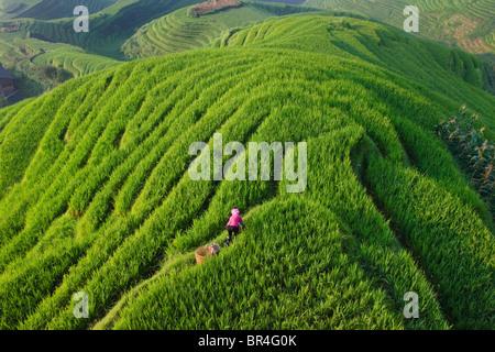 Zhuang Mädchen mit Reis-Terrassen in den Berg, Longsheng, Provinz Guangxi, China - Stockfoto