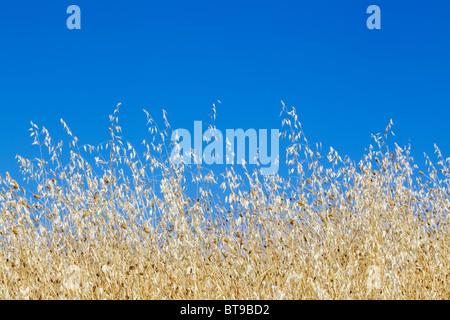Sommer Tage - blauer Himmel - Toskana, Italien, - Stockfoto
