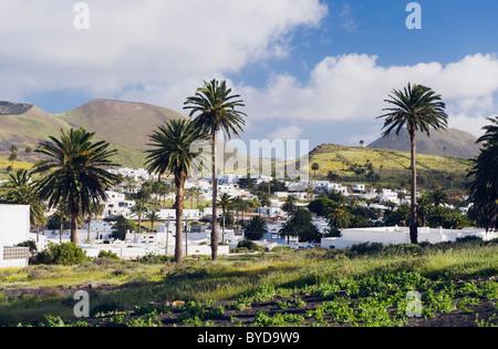 Palmenoase von Haria, Lanzarote, Kanarische Inseln, Spanien, Europa - Stockfoto