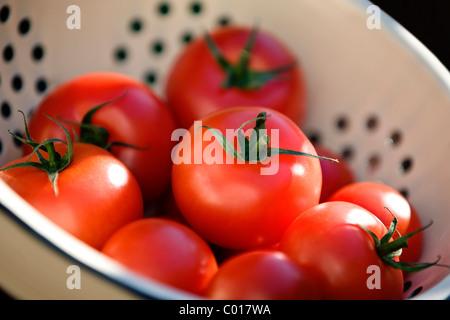 Reife rote Tomaten in einem Sieb - Stockfoto