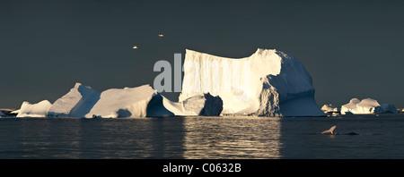 Seetang Möwen fliegen über Eisberge bei Sonnenaufgang mit Buckelwal, Vernadsky, Antarktis - Stockfoto