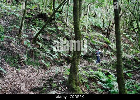 Weibliche Wanderer im Laurisilva (Lorbeerwald) in das Anaga-Gebirge auf Teneriffa auf den Kanarischen Inseln - Stockfoto