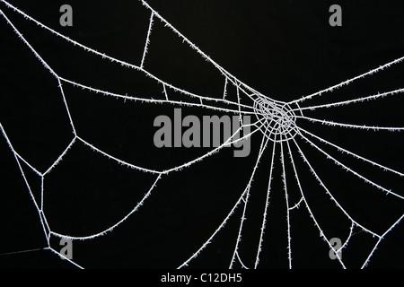 Eisiges Eis kalt weiß satiniertem Spinnennetz vor einem schwarzen Hintergrund (Arten?). - Stockfoto