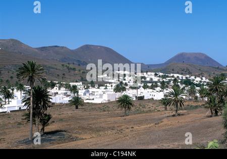 Palm-Baum Oase Haria, Lanzarote, Kanarische Inseln, Spanien, Europa - Stockfoto