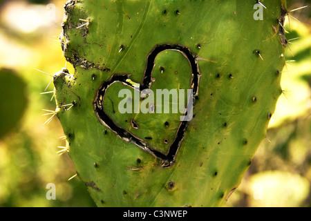 Kaktus - Stockfoto