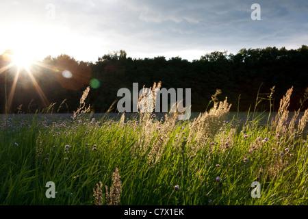 Eine Wiese mit Blumen in der Nähe von Teerofen, die Teil des Dorfes Schönhöhe und befindet sich am Rande der Großsee. - Stockfoto
