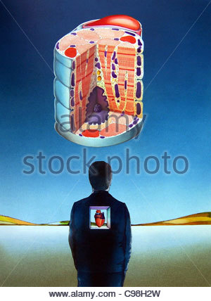 Rckenmark - Stockfoto