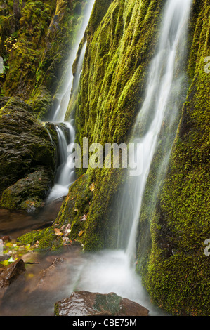 Mond fällt; Umpqua National Forest, Cascade Mountains, Oregon. - Stockfoto