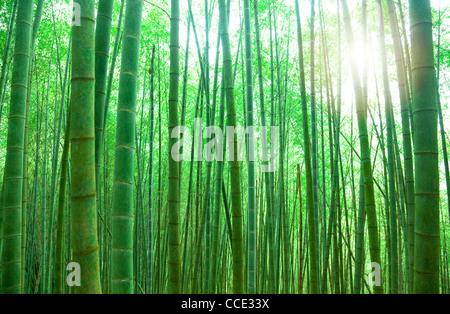 grüner Bambuswald mit Sonnenlicht - Stockfoto