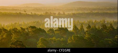 Nebel steigt im Morgengrauen über den Caledonian Wald Rothiemurchus Estate, in den Cairngorms National Park. - Stockfoto