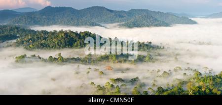 Nebel und niedrige Wolken hängen über Dipterocarp Tieflandregenwald, kurz nach Sonnenaufgang. Herzen der Danum Valley, - Stockfoto