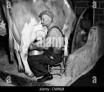 1930S 1940S ÄLTERER BAUER IN OVERALLS GUERNSEY-KUH ZU MELKEN - Stockfoto