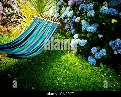 Sommer in Neuseeland: Blaue Hortensie, Hängematte und Rasen. - Stockfoto