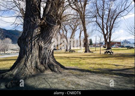 Grob strukturierte Rinde auf alten Weiden, Riverside Park, Salida, Colorado, USA - Stockfoto