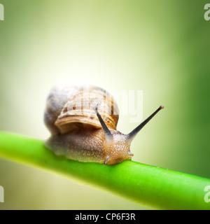 Schnecke kriecht auf grünem Stiel - Stockfoto
