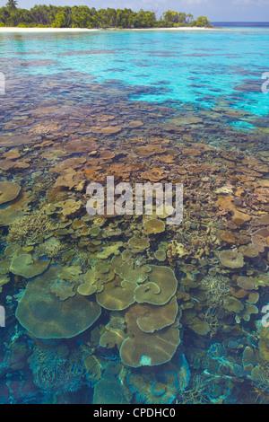 Korallen-Platten, Lagune und tropische Insel, Malediven, Indischer Ozean, Asien - Stockfoto