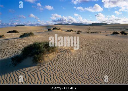 Sanddünen in der Nähe von Corralejo, Fuerteventura, Kanarische Inseln, Spanien, Atlantik, Europa - Stockfoto