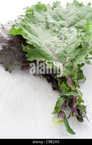 Frischen Grünkohl - Stockfoto