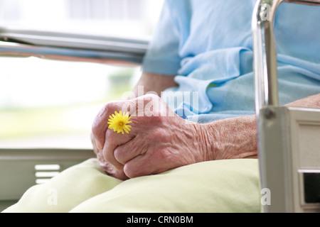 Ältere Frau im Rollstuhl, die eine Blume - Stockfoto