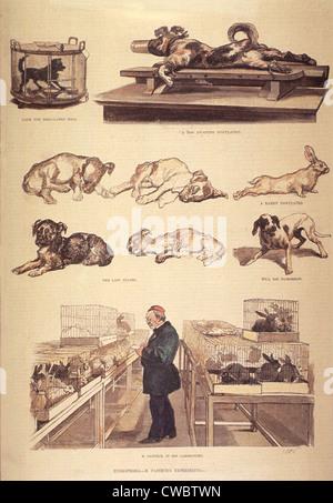 Louis Pasteur (1822-1895) im Labor arbeiten an Tollwut (Tollwut) experimentiert mit Kaninchen und Hunde. 1885. - Stockfoto