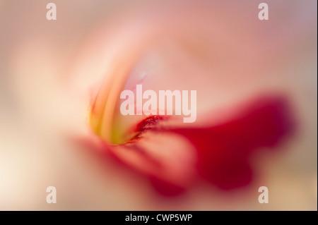 Tulpe, extreme Nahaufnahme - Stockfoto