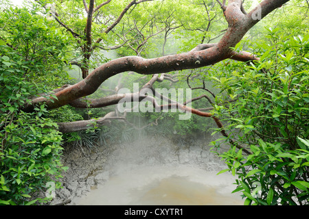 Heißen Schlamm springs, Rincon De La Vieja Nationalpark, Guanacaste, Costa Rica, Südamerika - Stockfoto