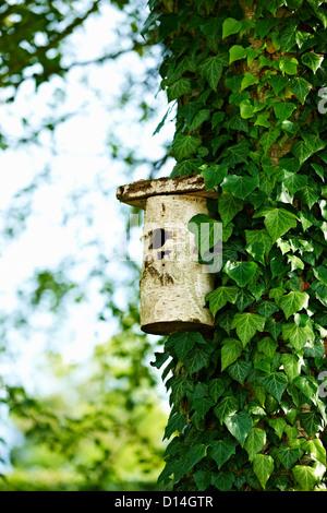 Vogelhaus auf Efeu Baum im Hinterhof - Stockfoto