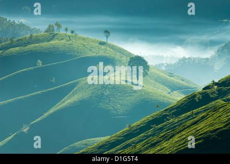 Am frühen Morgen Nebel über Teeplantagen, in der Nähe von Munnar, Kerala, Indien, Asien - Stockfoto