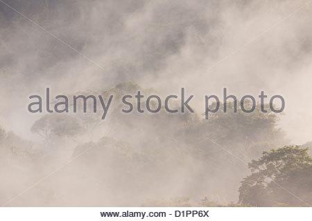 Nebel im Morgengrauen im Regenwald von Soberania Nationalpark, Republik von Panama. - Stockfoto