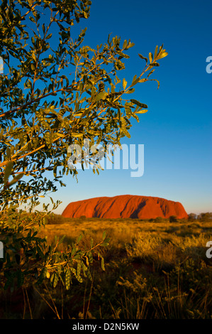Uluru (Ayers Rock), Uluru-Kata Tjuta National Park, UNESCO-Weltkulturerbe, Northern Territory, Australien, Pazifik - Stockfoto