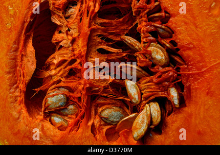 Butternut, halbierte zeigt Samen - Stockfoto
