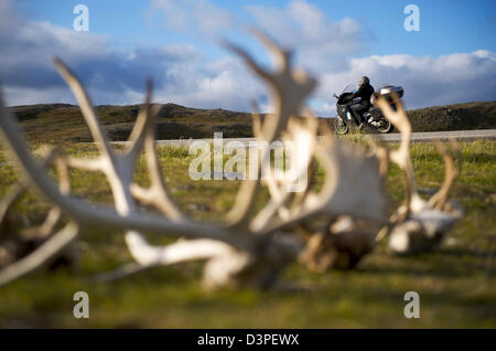 Rentier-Geweih in North Cape Norwegen - Stockfoto