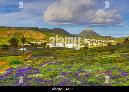Spanien, Europa, Kanarische Inseln, Haria, Lanzarote, Mague, bunt, Blumen, Insel, Landschaft, palm-Baum, touristische, - Stockfoto