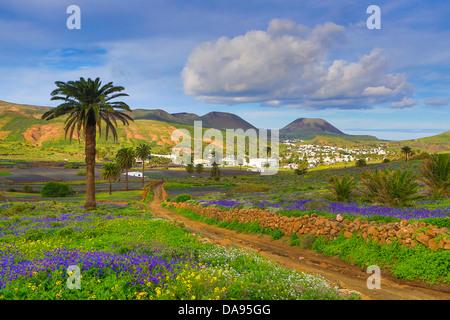 Spanien, Europa, Kanarische Inseln, Haria, Lanzarote, Mague, Dorf, Landwirtschaft, bunt, Blumen, Insel, Landschaft, - Stockfoto