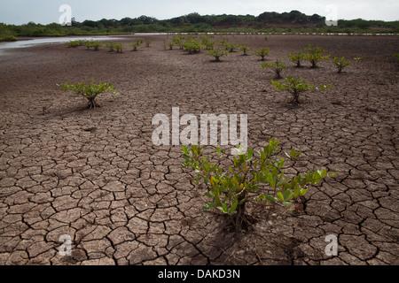Wüstenlandschaft im Sarigua Nationalpark, Herrera Provinz, Republik von Panama. - Stockfoto