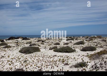 Strand mit weißem sand - Stockfoto