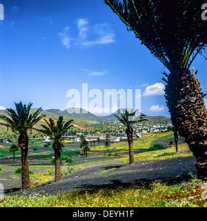 Palmen in Haria Oase Lanzarote-Kanarische Inseln-Spanien - Stockfoto