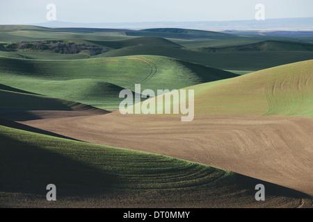Washington USA Blick auf grünen Hügeln und bewirtschafteten Felder - Stockfoto