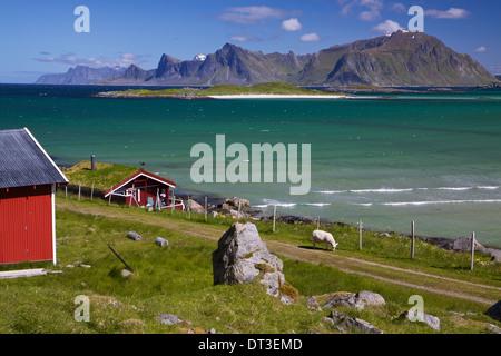 Farm der Tiere mit Sod Dach auf Lofoten in Norwegen - Stockfoto