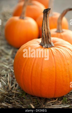 Im Herbst Kürbisse, lebendige Orange, Nahaufnahme - Stockfoto