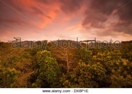 Morgendämmerung in Soberania Nationalpark, Republik von Panama. - Stockfoto