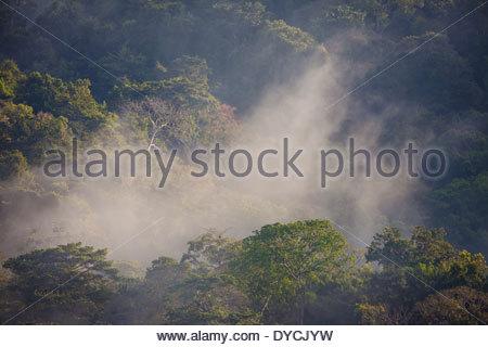 Nebligen Regenwald im Morgengrauen in Soberania Nationalpark, Republik von Panama. - Stockfoto