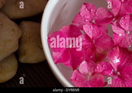 Rosa Hortensie Blumen schweben in einer Schüssel mit ätherischen Ölen. Geringe Schärfentiefe. Landschaft. Spa-Szene, - Stockfoto