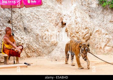 Buddhistischer Mönch mit einem bengalischen Tiger im Tiger-Tempel am 23. Mai 2014 in Kanchanaburi, Thailand - Stockfoto