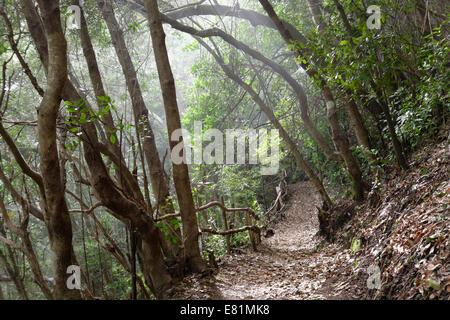 Wanderweg in den Lorbeerwald Los Tilos Biosphärenreservat, in der Nähe von Los Sauces, La Palma, Kanarische Inseln, - Stockfoto