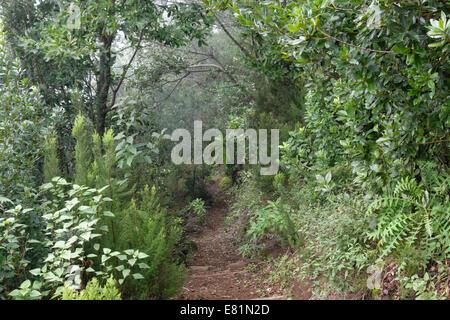 Wanderweg im Lorbeerwald Los Tilos-Biosphären-Reservat in der Nähe von Los Sauces, La Palma, Kanarische Inseln, - Stockfoto